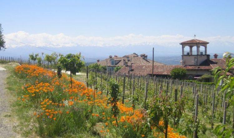 In Italien dem Wein auf der Spur