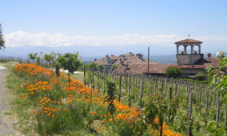 Das Weingut Conterno Fantino in Monforte d'Alba im Piemont, Italien